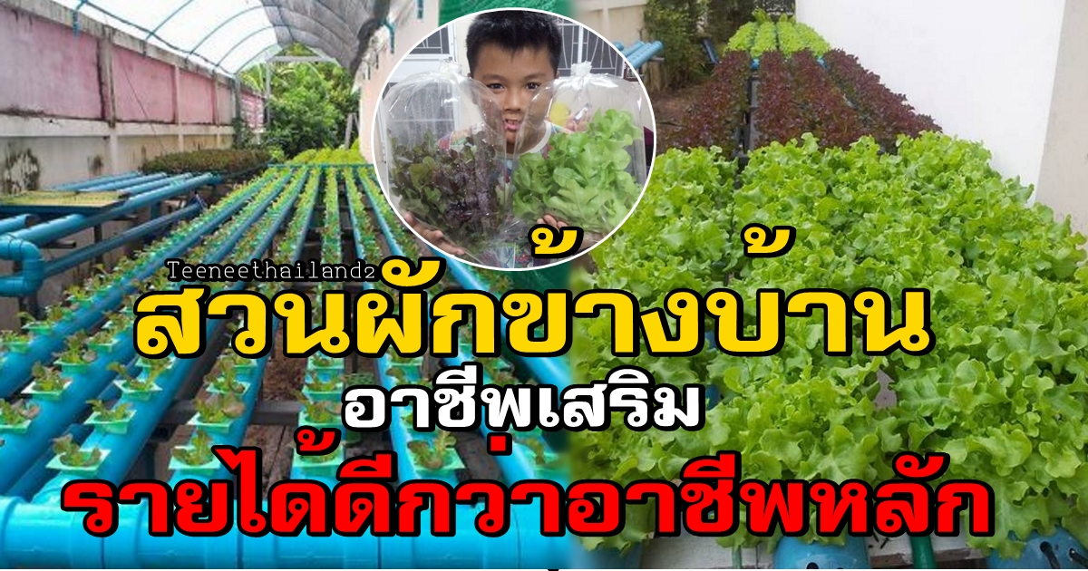 Photo of หนุ่มแชร์ประสบการณ์ ทำงานประจำเงินเดือนไม่พอเก็บ ใช้ข้างบ้านทำสวนผักอาชีพเสริม แต่ขายดีเหลือเชื่อ