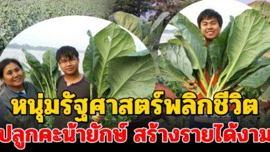 Photo of หนุ่มรัฐศาสตร์พลิกชีวิตเป็นเกษตรกร! ผันตัวปลูก 'คะน้ายักษ์' สร้างรายได้