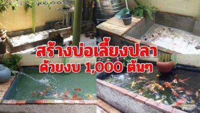 Photo of ไอเดียสุดเจ๋ง สร้างบ่อเลี้ยงปลาด้วยตัวเอง อย่างง่ายๆ ด้วยงบประมาณ 1,000 ต้นๆ