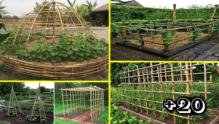 Photo of 20 ไอเดียค้างไม้เลื้อย สำหรับปลูกผักไว้ทาน และตกแต่งบ้านสวยๆ