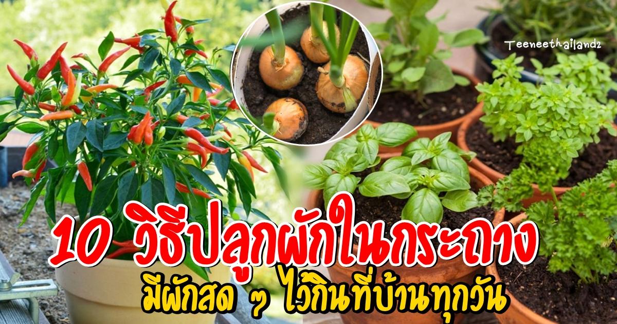 Photo of 10 วิธีปลูกผักในกระถาง มีผักสด ๆ ไว้กินที่บ้านทุกวัน