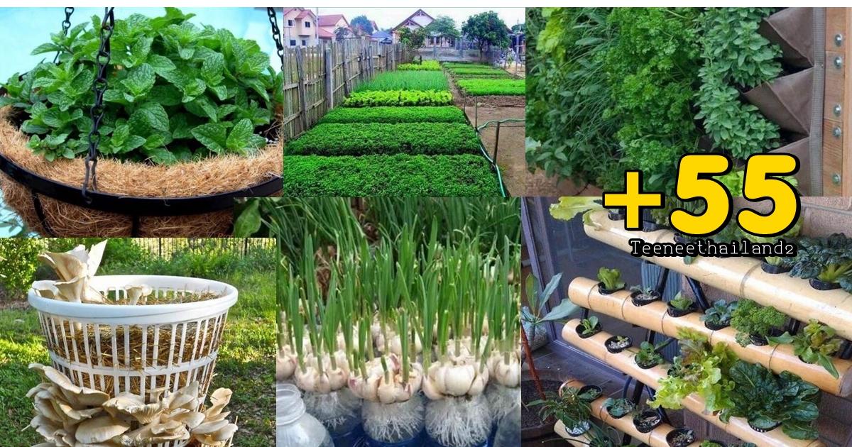 Photo of ไอเดียปลูกผักข้างบ้าน ประหยัดพื้นที่ ปลูกง่าย แถมเพิ่มสีสันให้บ้าน