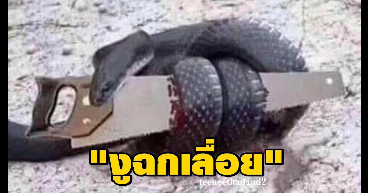 """Photo of """"งูฉกเลื่อย"""" เรื่องเล่าเตือนสติ"""
