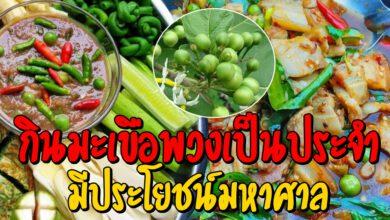 Photo of 6 สิ่งที่เกิดหลังกินมะเขือพวงเป็ นป ร ะจำ