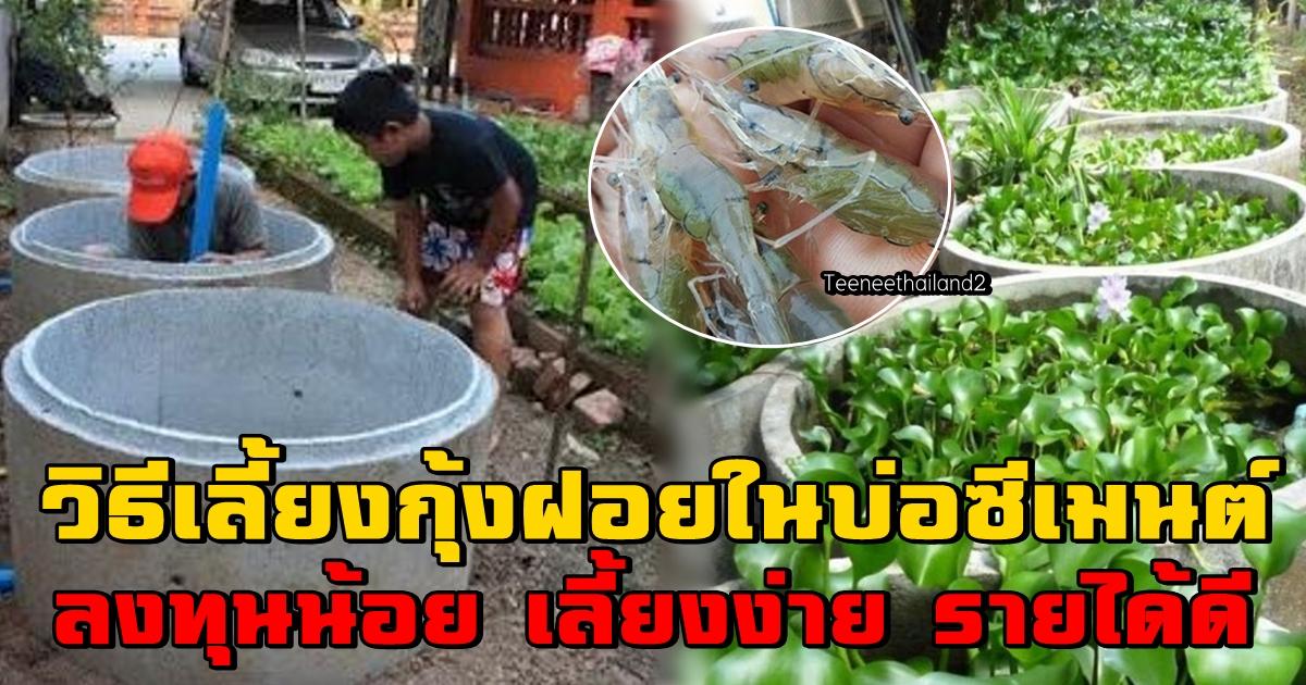 Photo of วิธีเลี้ยงกุ้งฝอยในบ่อซีเมนต์ ลงทุนน้อย เลี้ยงง่าย รายได้ดี