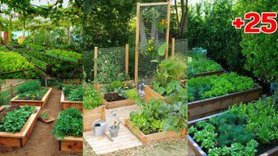 """Photo of ไอเดีย """"แปลงผักข้างบ้าน"""" เปลี่ยนทางเดินแคบๆเป็นสวนกินได้"""