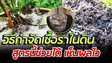 Photo of 3 วิธีทำง่ายๆ หายเกลี้ยง พืชผักโตไว งามทั้งสวน