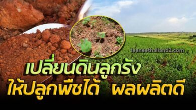 Photo of วิธีปรับปรุงดินลูกรังให้ปลูกพืชได้ พืชงาม โตเร็ว