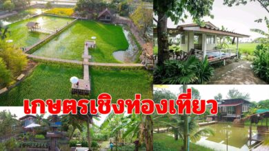 """Photo of การทำ """"เกษตรเชิงท่องเที่ยว"""" เปลี่ยนแปลงผักเป็นสวนสวย และ ที่พักแบบธรรมชาติ"""