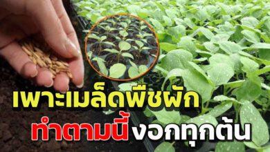 Photo of วิธี เพาะเมล็ดผัก ให้งอกเร็วมือใหม่ก็ทำได้